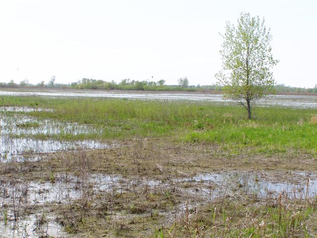 Another view of the modern remnants for the Black Swamp in the Ottawa National Wildlife Reserve (Patrick 2015)