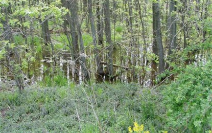 Wetlands of War: The Case for Amphibious Warfare in Prehistory